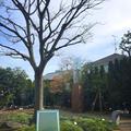 めるさんの旧正田邸跡地(ねむの木の庭)への投稿