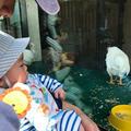 じゅんさんの上野動物園への投稿