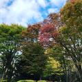 hirokorocoさんの世田谷公園への投稿