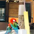 シバローさんの多摩動物公園への投稿