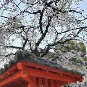 Takako Nagatomoさんのとある神社@福岡への投稿