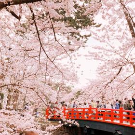 りーさんの弘前公園の桜への投稿