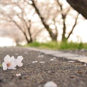 じゅろろさんの内津川への投稿