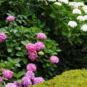 yukiさんの横須賀市立しょうぶ園への投稿