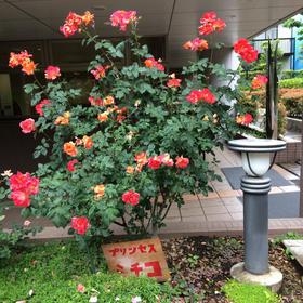 吉田朋代さんの杉並区区立高井戸中学校杉並区への投稿