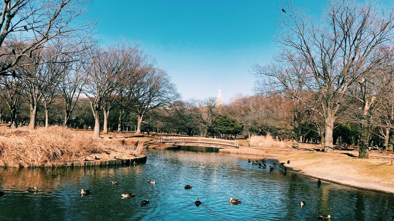 秋さんの代々木公園への投稿