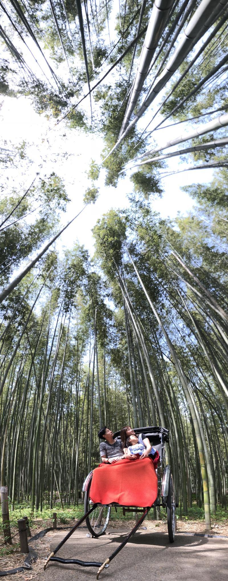 。さんの竹林の道への投稿