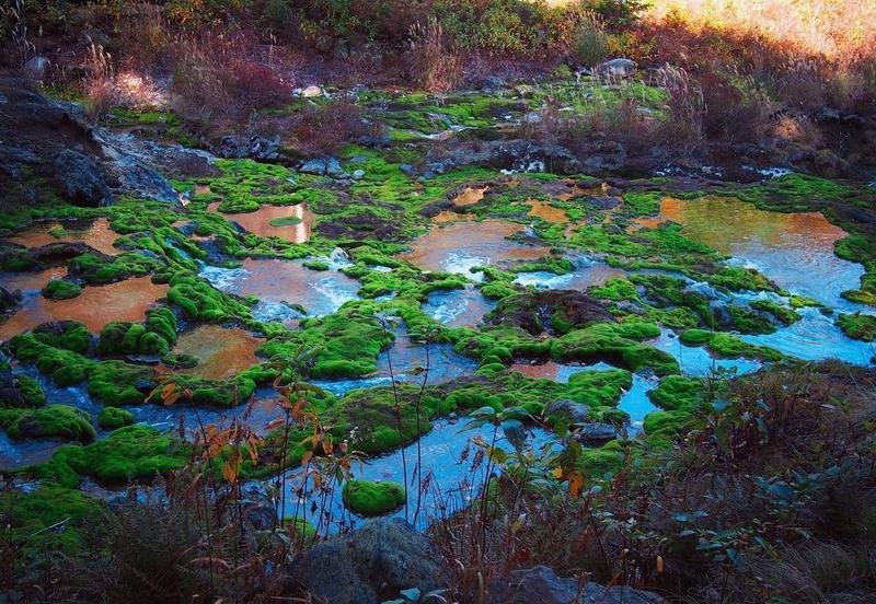 junp_photoさんのチャツボミゴケ公園への投稿